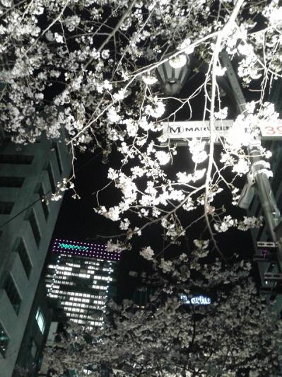 170404_193540見上げる桜@丸善.jpg